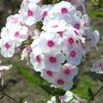 Фото 34: Нежные цветы