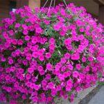 Фото 39: Цветы в клумбе