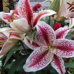 Фото 67: нежные цветы в крапинку