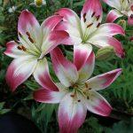 Фото 61: замечательные цветы