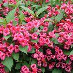 Фото 48: цветет