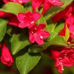 Фото 53: Красный цветок