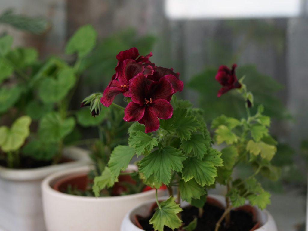 Как правильно выращивать цветок