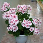 Фото 2: Прекрасный цветок
