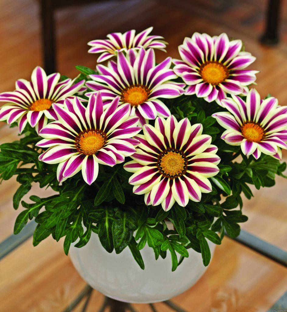 красивые цветы в горшке