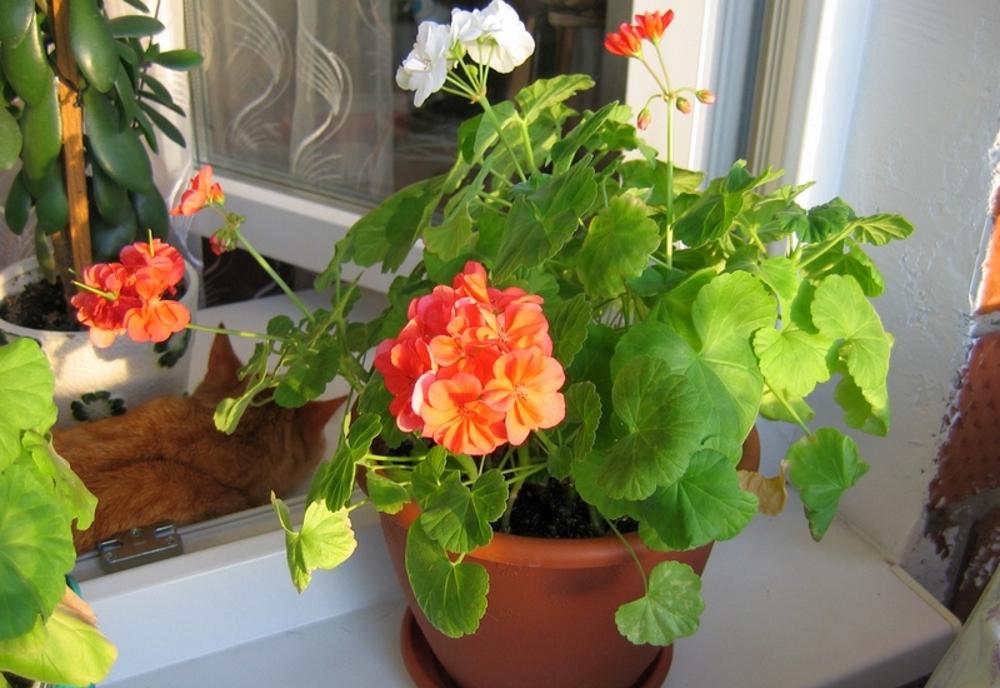 Где лучше выращивать цветы