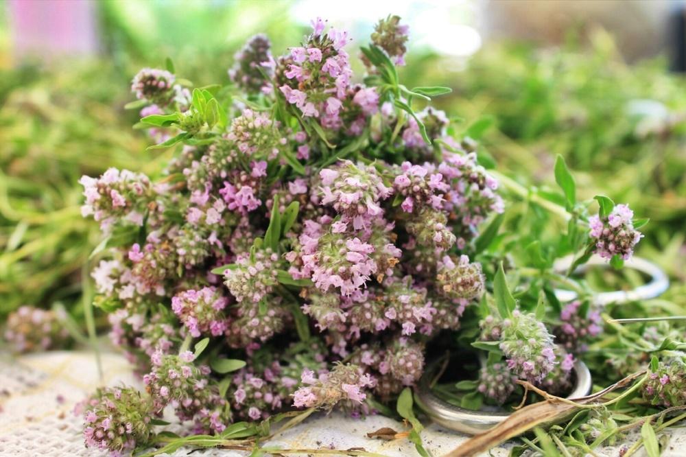 Лечение травой в домашних условиях