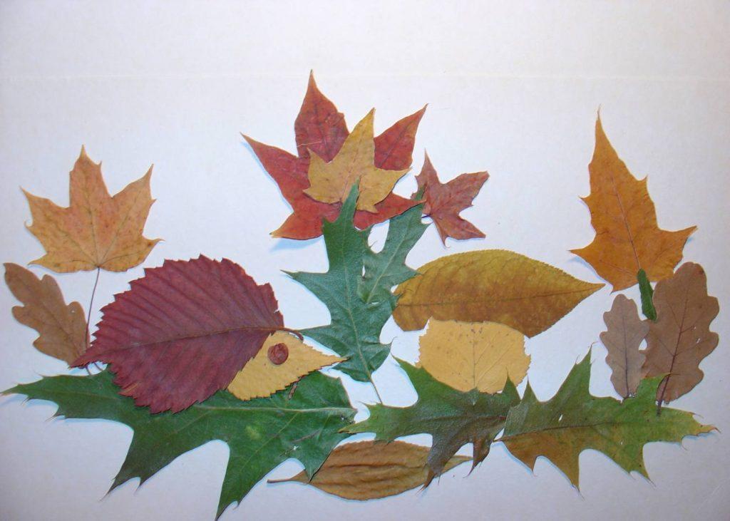Осенние листья для стенгазеты