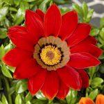 Фото 12: Красный красивый цветок