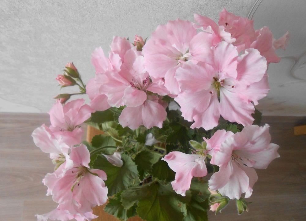 Прекрасный розовый цветок