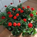 Фото 10: Красные цветы