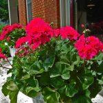 Фото 4: Как выращивать цветы