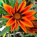 Фото 35: Выращивание многолетнего цветка
