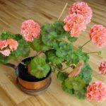 Фото 18: Домашний цветок