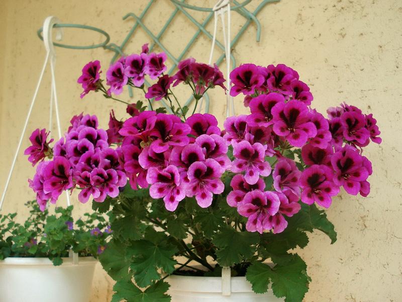Как ухаживать за цветами в домашних условиях