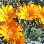 Фото 25: Садовые цветы
