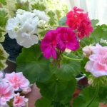 Фото 25: Комнатное растение