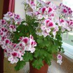 Фото 28: Красивый домашний цветок