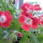 Фото 27: Розовые цветы