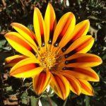 Фото 34: Прекрасный цветок