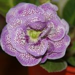 Фото 71: Цветок фиолетовый