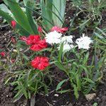 Фото 48: Цветок