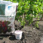 Фото 45: Удобрение винограда