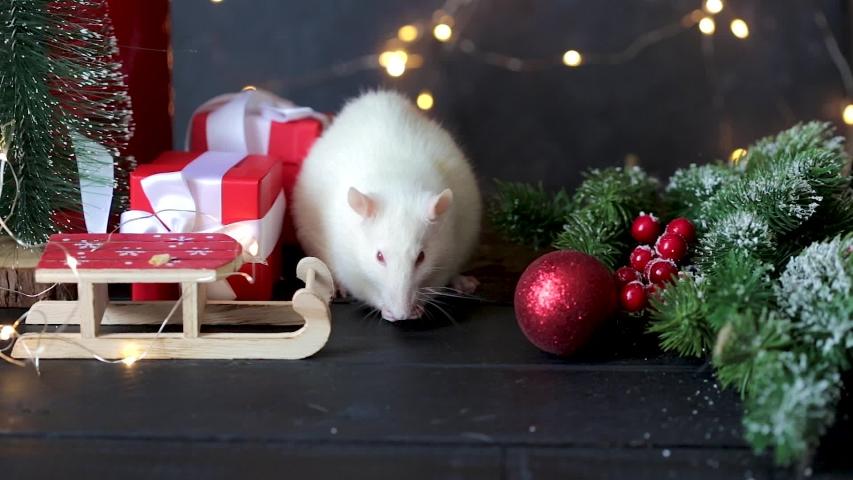 Рождественская белая крыса