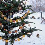 Фото 5: Украшение елочки во дворе сухофруктами