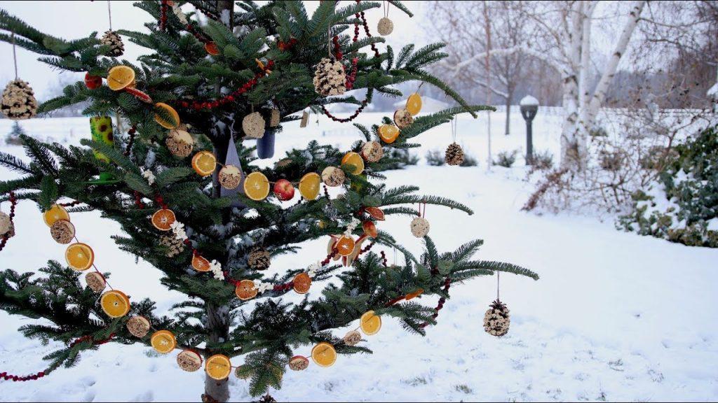 Украшение елочки во дворе сухофруктами и шишками