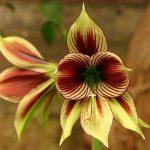 Фото 10: Букет цветка