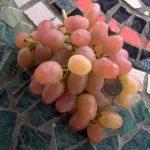 Фото 103: Виноград Ливия