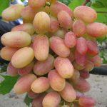 Фото 12: Виноград фото преображение