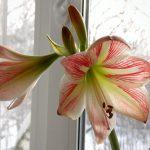 Фото 31: Комнатный цветок