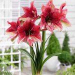 Фото 33: Красные цветки