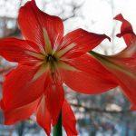 Фото 39: Красный цветок