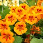 Фото 52: Оранжевый цветок