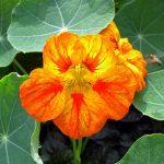 Фото 58: Сорта цветы