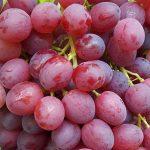 Фото 102: Сорт винограда