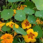 Фото 35: Фото жёлтых цветов