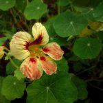 Фото 36: Фото растения