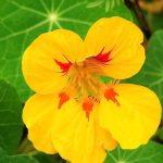 Фото 39: Фото цветов