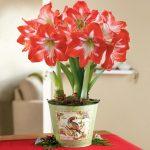 Фото 54: Фото цветок