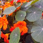 Фото 23: Цветок посадка