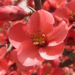 Фото 64: Цветок файвы