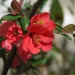 Фото 59: Цвет