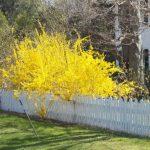 Фото 30: Жёлтое дерево