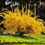 Фото 31: Жёлтое растение