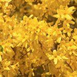 Фото 56: Жёлтый растения