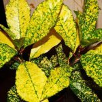 Фото 62: Жёлтый цветок
